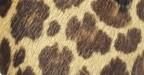 Potro Leopardo
