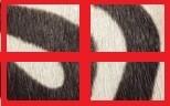 Potro Cebra/Rojo